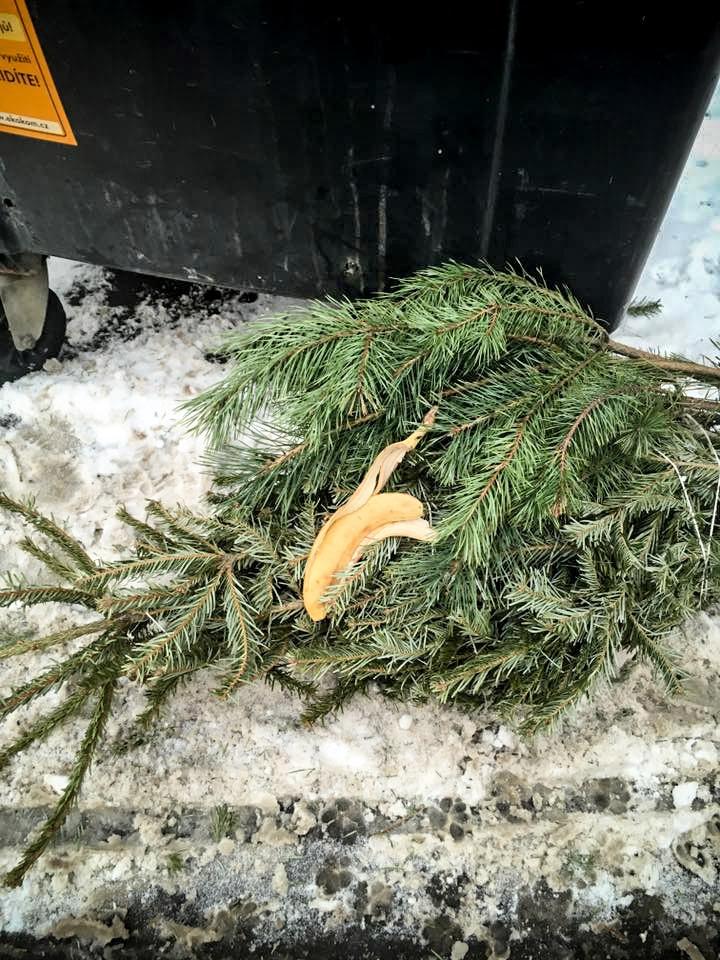 slupka_bioodpad_zbytky_strom_vanoce