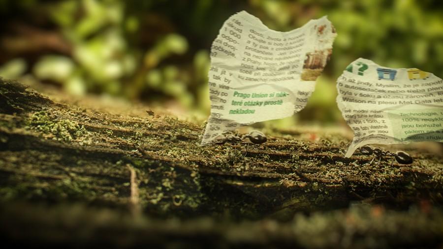 mravenci_čistou_přírodou