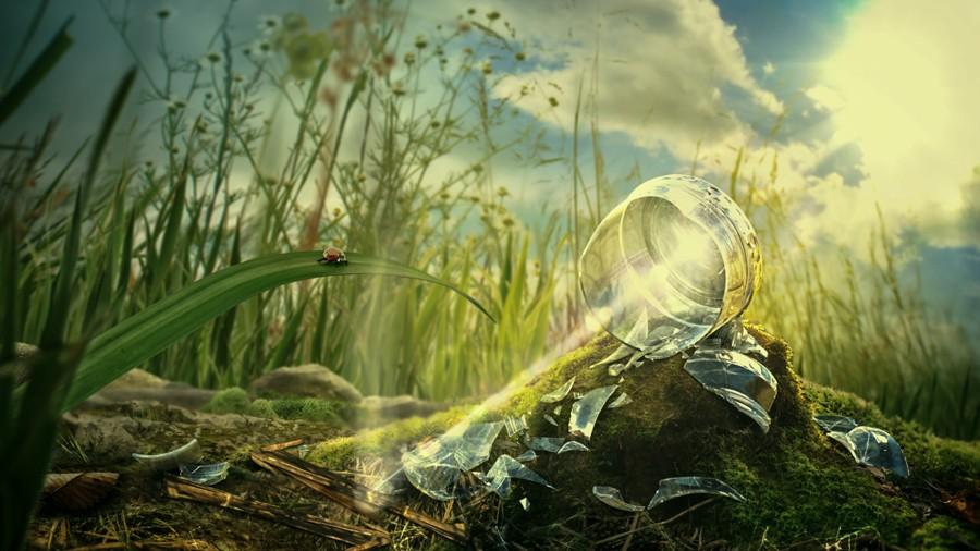 Beruška_čistou_přírodou