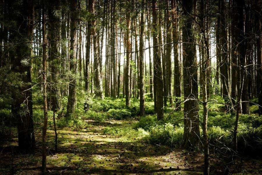 Helfenburg_ciste_vylety_cesta_les