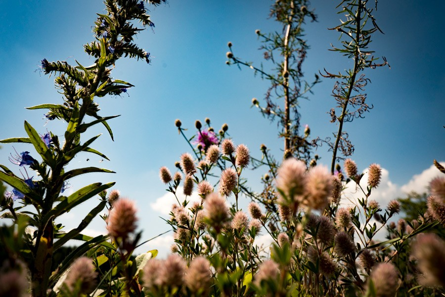 helfenburg_ciste_vylety_flora_cista_priroda_samosebou