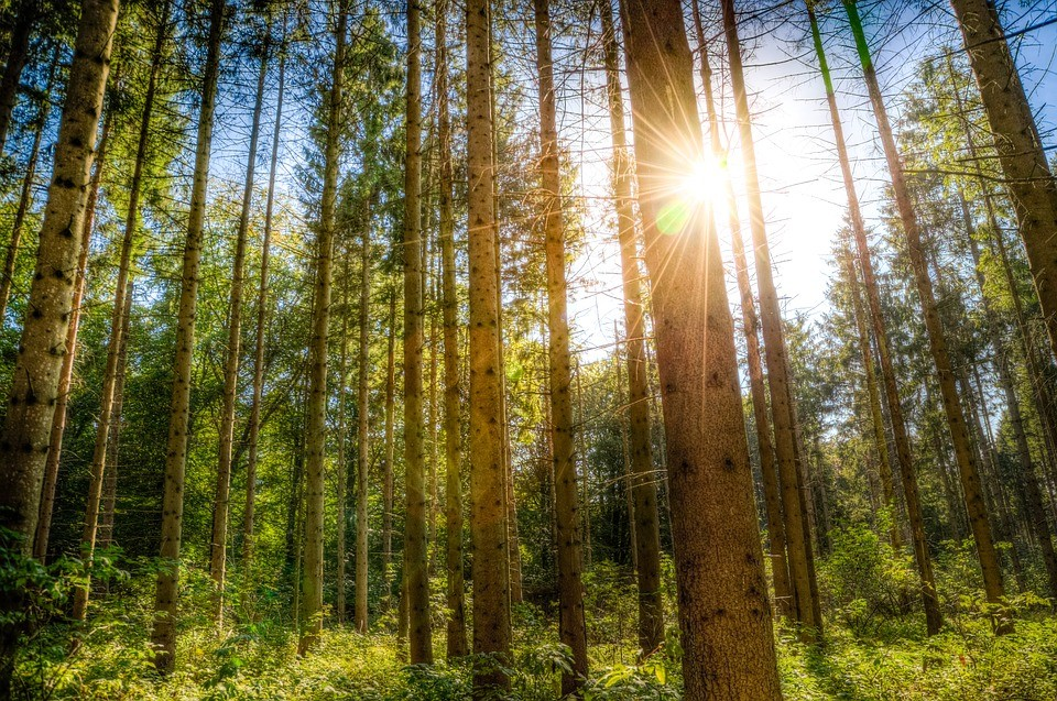 ekologie_priroda_zivotni_prostredi_les_strom