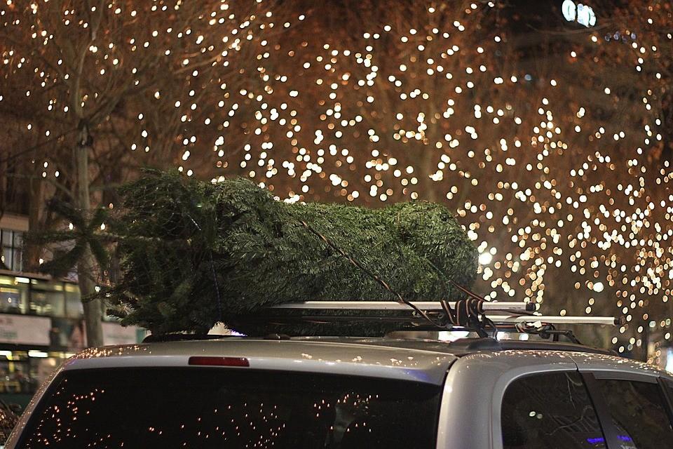 vánoční_strom_smrček