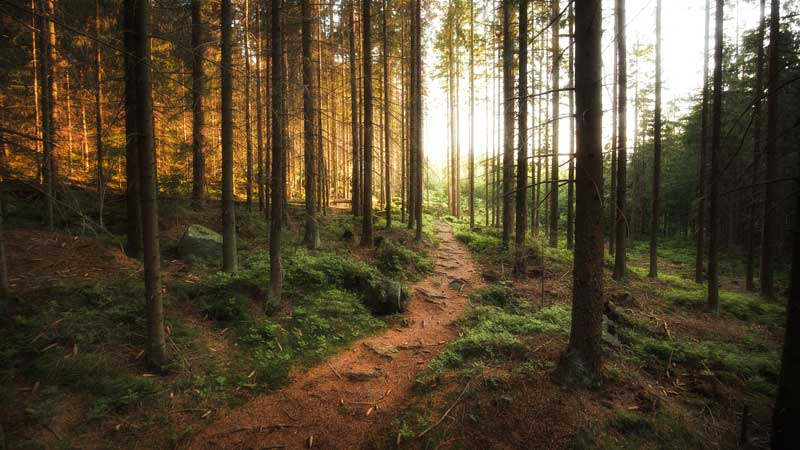 cista_priroda_havel_samosebou_trideni_ekologie