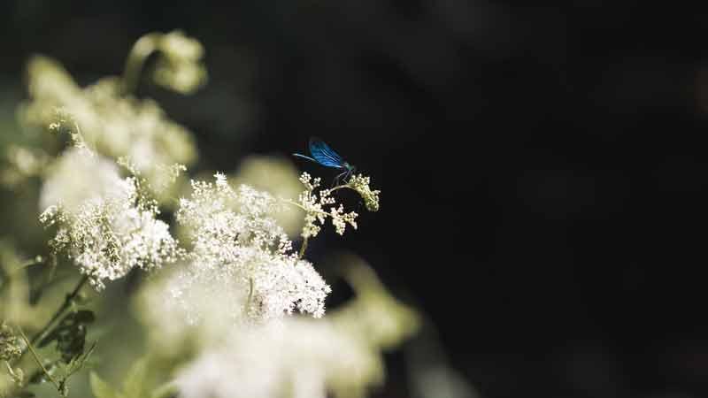 cista_priroda_havel_trideni_kvetina_motyl