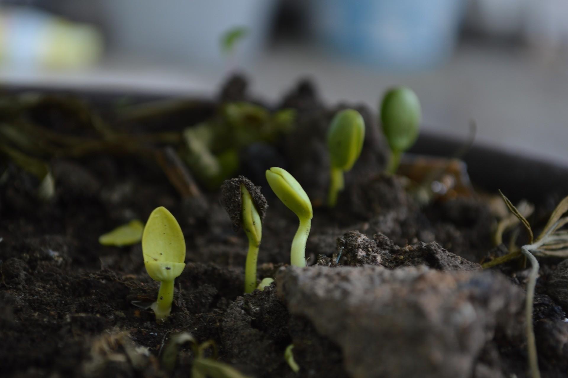 kompost_tipy_rady_samosebou_rostlina