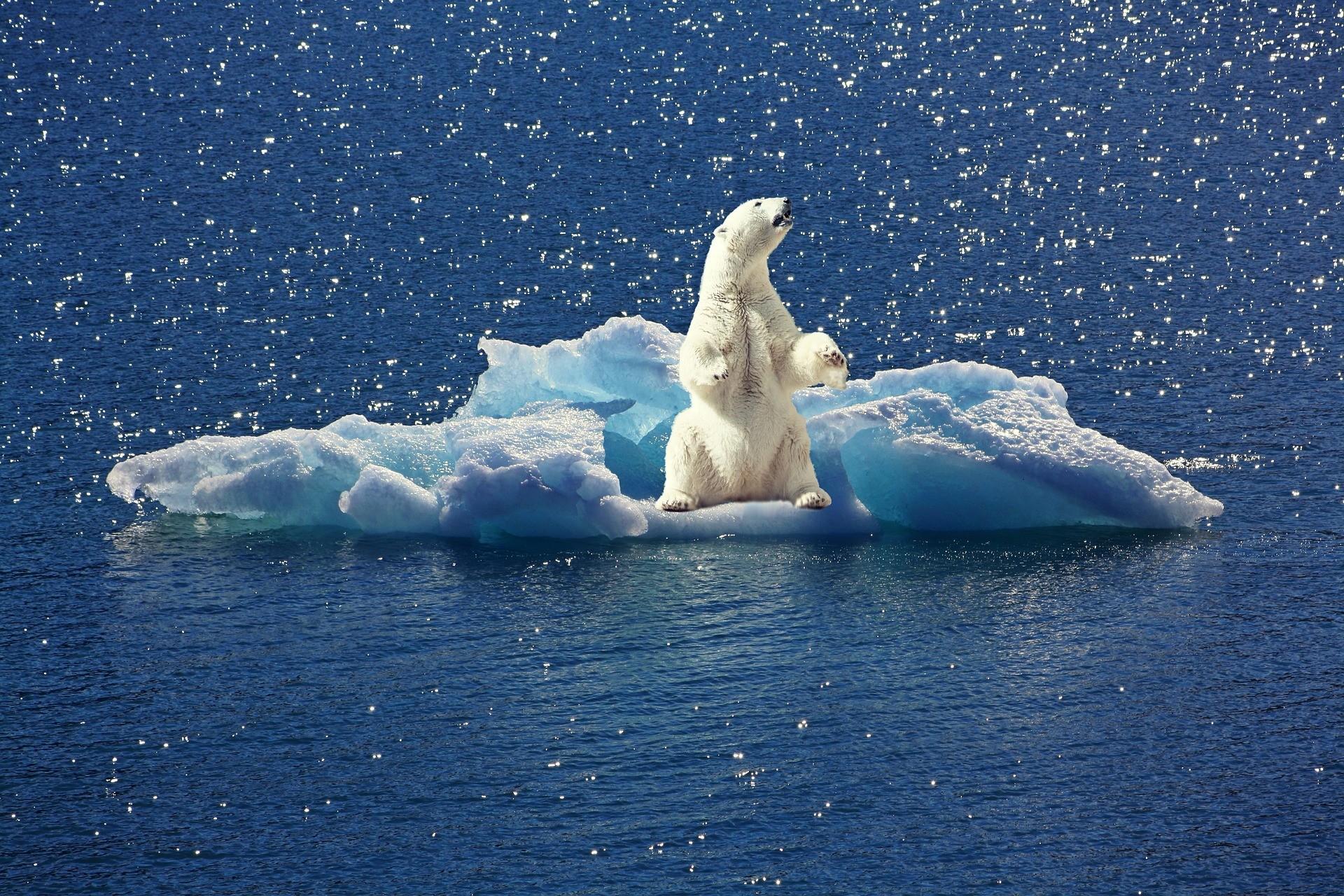 ledovy medved_led_priroda_ocean