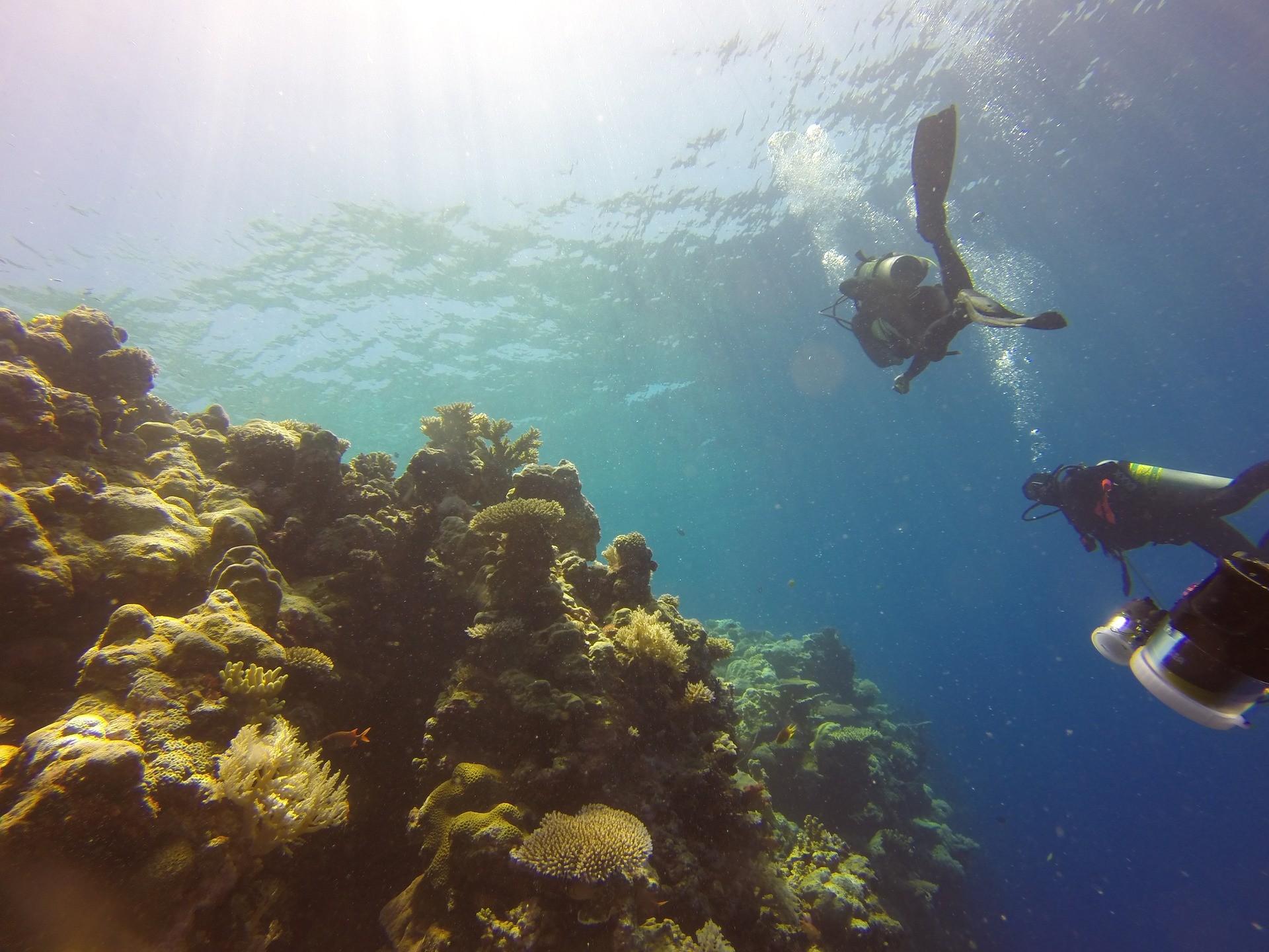 palau_ostrov_potapeci_more_koral_zivotni_prostredi