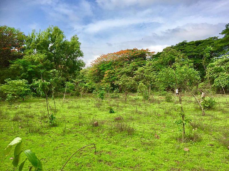 ekonovinky_aarey_forest_les_mumbai