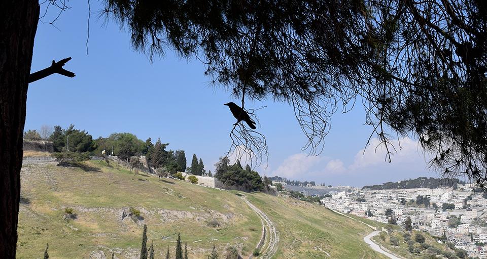 jeruzalem_ptak