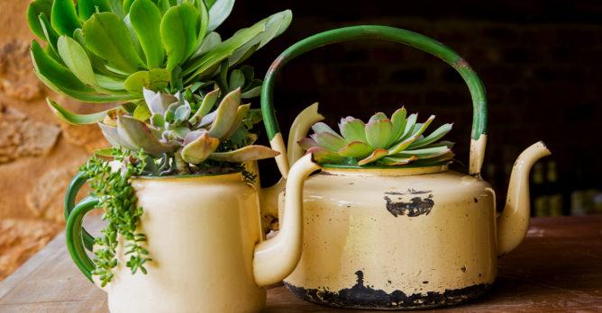konvice_kvetinac_upcyklace_rostlina