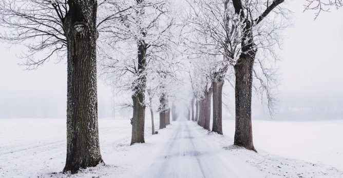 zima_stromy_cesta_snih_mraz_led_krajina